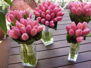 Buy wholesale tulips flowers