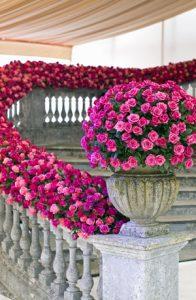 Wholesale roses online