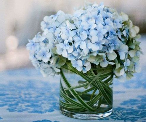 Hydrangeas Flowers for Sale