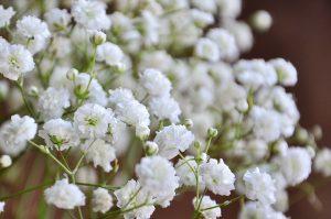 Wholesale Baby's Breath Flowers In Bulk