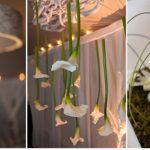 Buy Mini Calla Lilies
