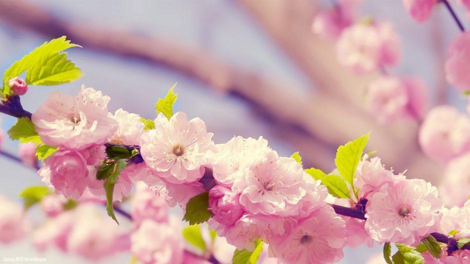 Buy fresh cut flowers in bulk