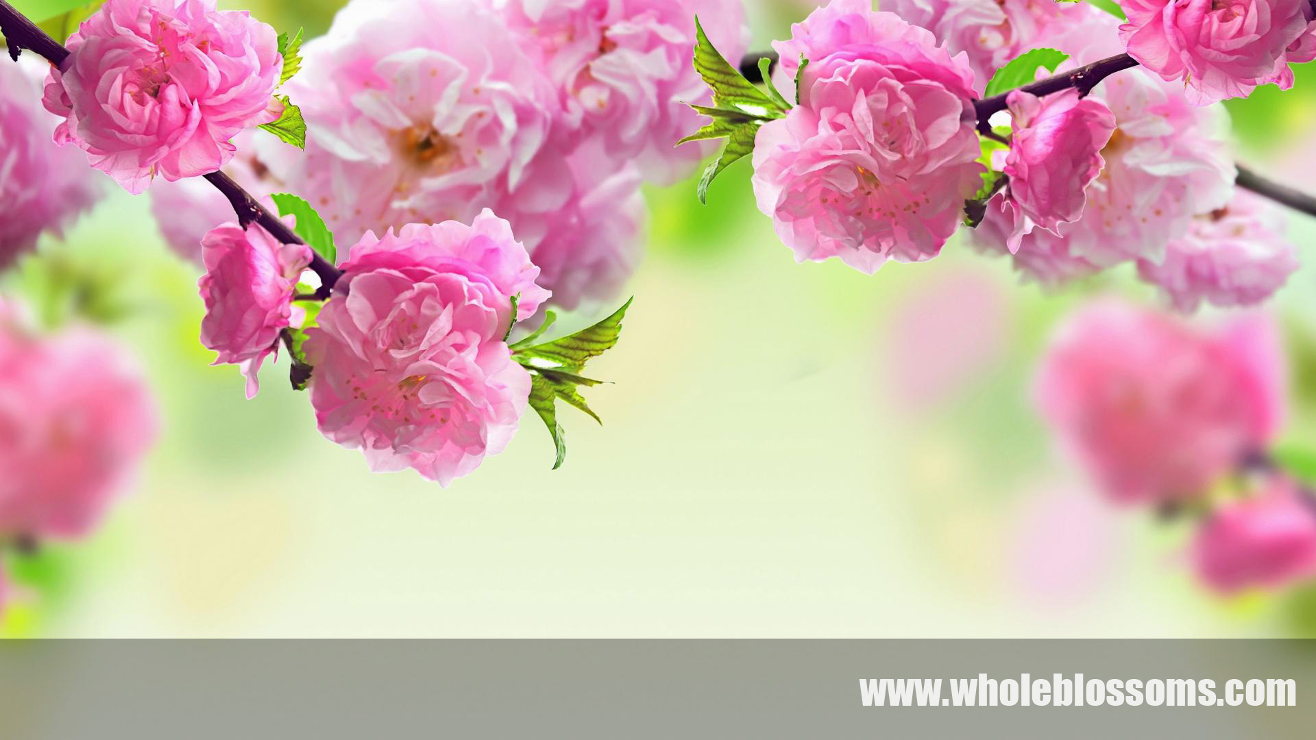 The three reasons to buy wholesale flowers online with Whole Blossoms