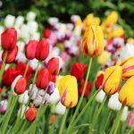 Bulk flowers online