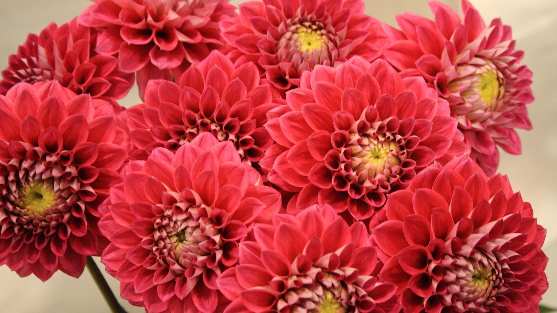 3 Smart Reasons To Buy Dahlias Flowers Online