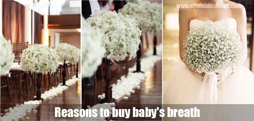 Baby's Breath In Bulk