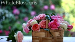 Bulk Garden Rose