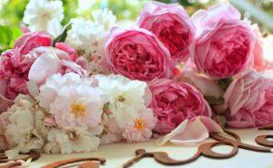 bulk garden roses