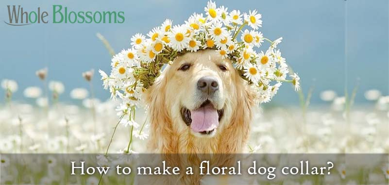 How to make a floral dog collar?