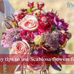 A few easy tips to use Scabiosa flowers for wedding