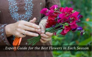 Expert Guide for the Best Flowers in Each Season