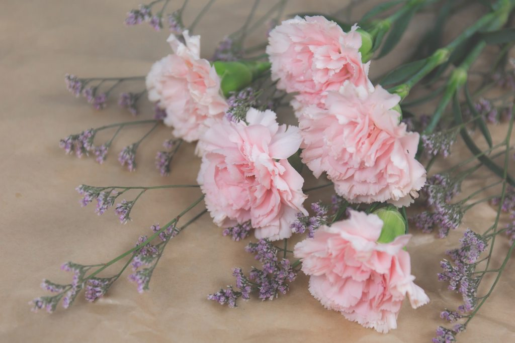 Learn how to create an amazing carnation bouquet meaningful in its profoundness and vibrant in its essence the different colors portray different meanings pink carnation is a symbol of courage or mightylinksfo