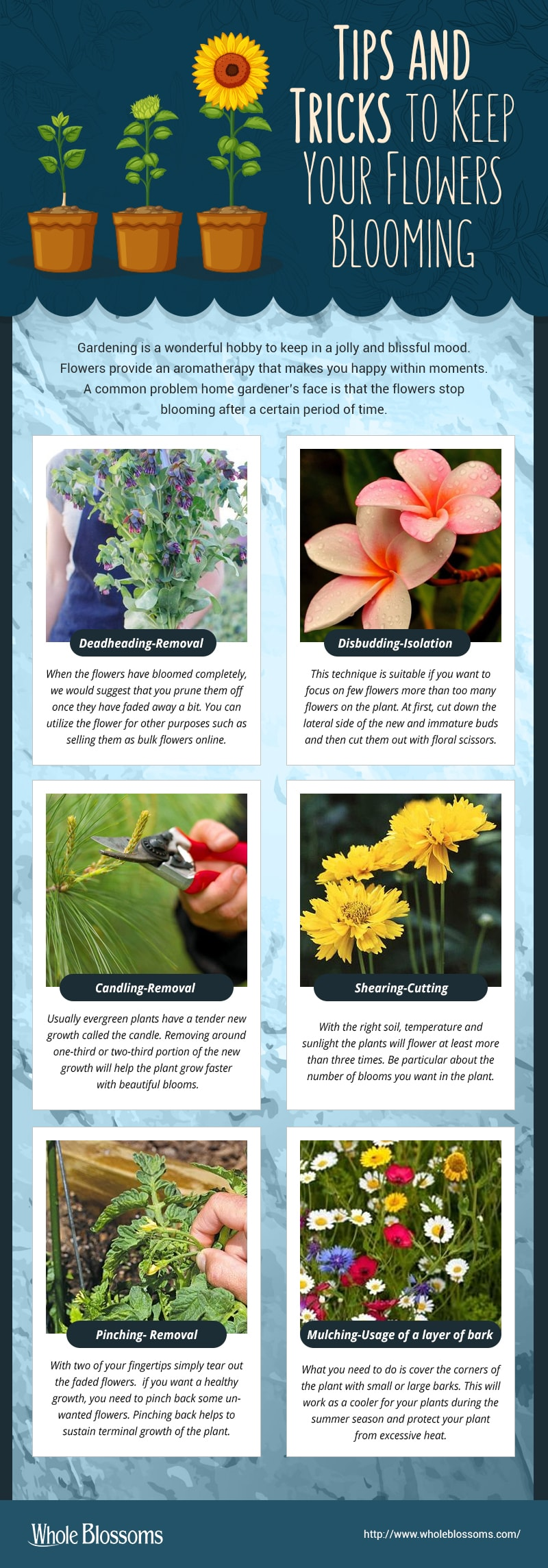 Tips & Tricks to Keep Your Flowers Blooming