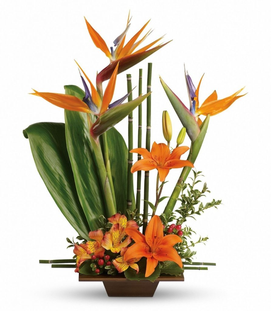 order online birds of paradise