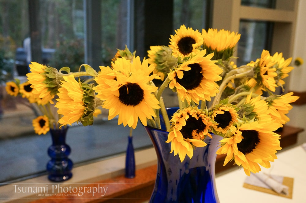 where to buy sunflowers