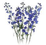Blue Delphinium Flower