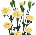 Carnation Cream Flowers Mini