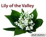 Wholesale Lily of The Valley