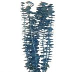 Eucalyptus Metallic Blue Flower Filler