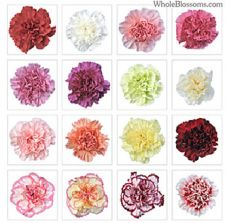 Assorted Carnations for Valentine's Day
