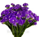 Wholesale Statice Flower