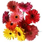 Wedding Flowers Gerberas