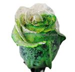 Glitter Green White Rose