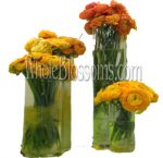 Ranunculus Flowers - Winter, Spring
