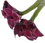 Calla Lilies Red Majestic Long