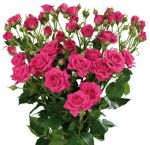 Wholesale Spray Roses