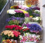 Fresh Cut Wholesale Flowers & Bulk Flowers