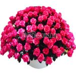 Wholesale Hot Pink Roses