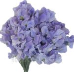 Sweet Pea Flowers for Sale