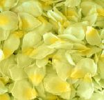 Green Rose Petals with Yellow Cast