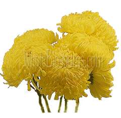 Football Mum Yellow Flowers