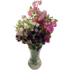 Sweet Pea Flowers Assorted