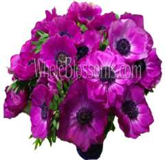Anemone Purple Flowers