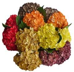 Assorted Airbrushed Fall Hydrangeas