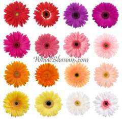 Gerbera Assorted Flowers
