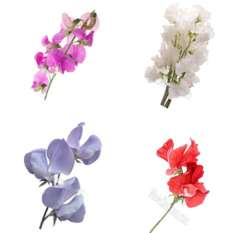 Sweet Peas Assorted