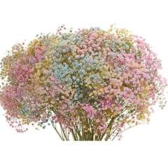 Babys Breath Pastel Colors