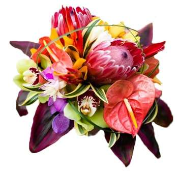 Buy Wholesale Tropical Flowers Online
