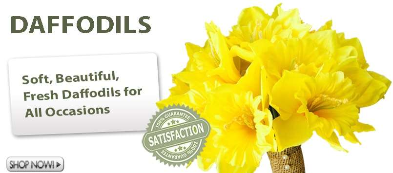 Daffodils for Weddings and Special Occasions!