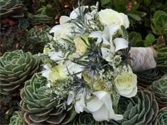 Fresh Succulents for Weddings and Events