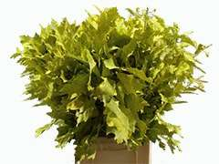 Buy Green Oak Leaves Bulk