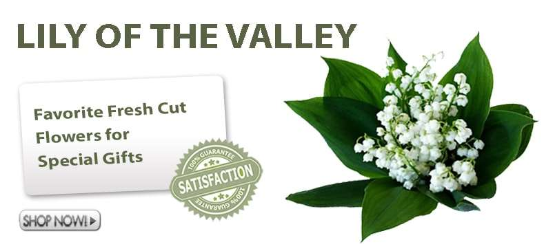 Buy Wholesale Lily of The Valley Online