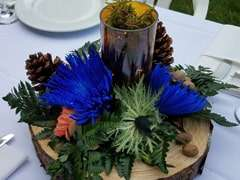 Thistle Eryngium for Floral Arrangements and Bouquets