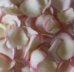 Fragrant Blush Rose Petals