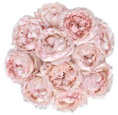 Garden Roses Light Pink Color