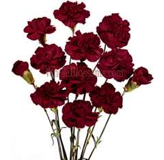 Carnation Burgundy Flowers Mini Chateau